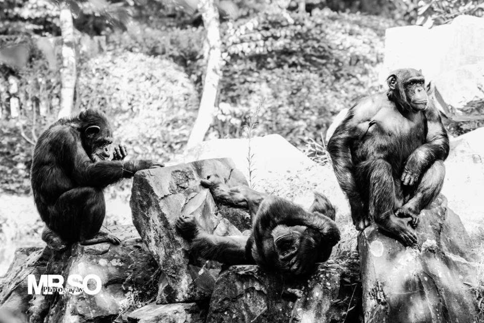 photo des trois singes de la sagesse par mrso.fr photographe animalier, voyage et paysage à Orléans, 45, Loiret et Centre Val de Loire