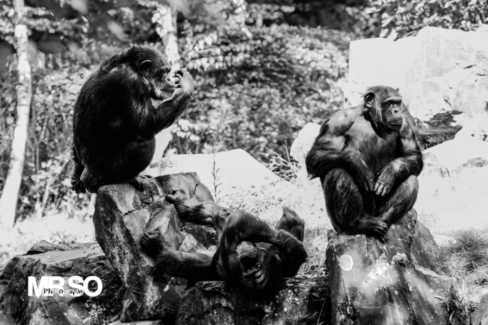 photo des trois singes de la sagesse