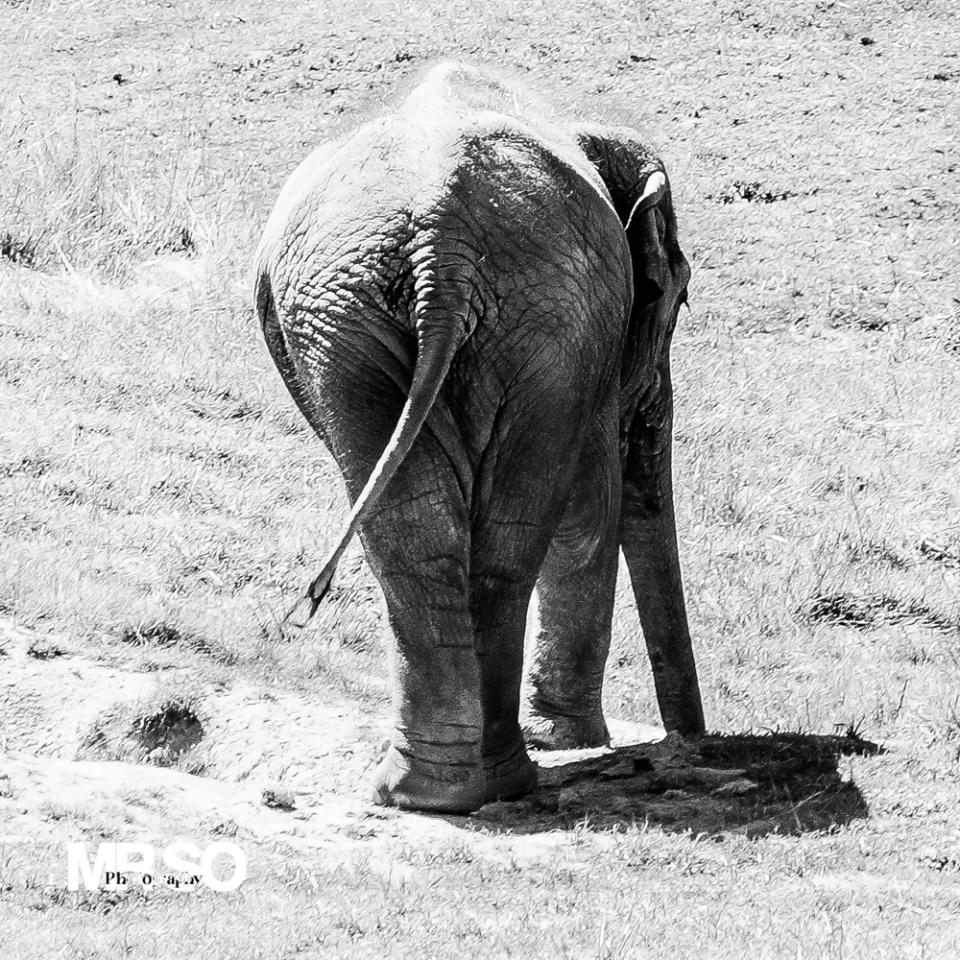 Photo de l'éléphant