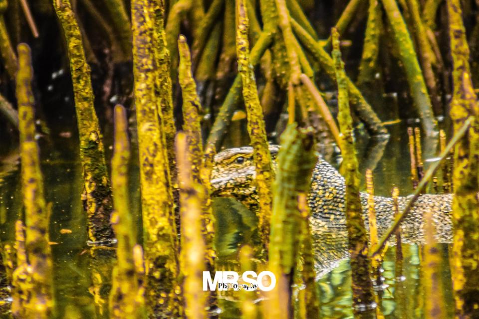 Le dragon par mrso.fr photographe animalier, voyage et paysage à Orléans, 45, Loiret et Centre Val de Loire