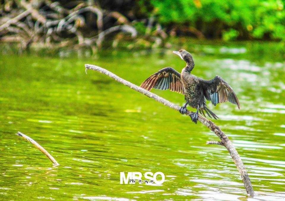 Les oiseaux du Sri Lanka