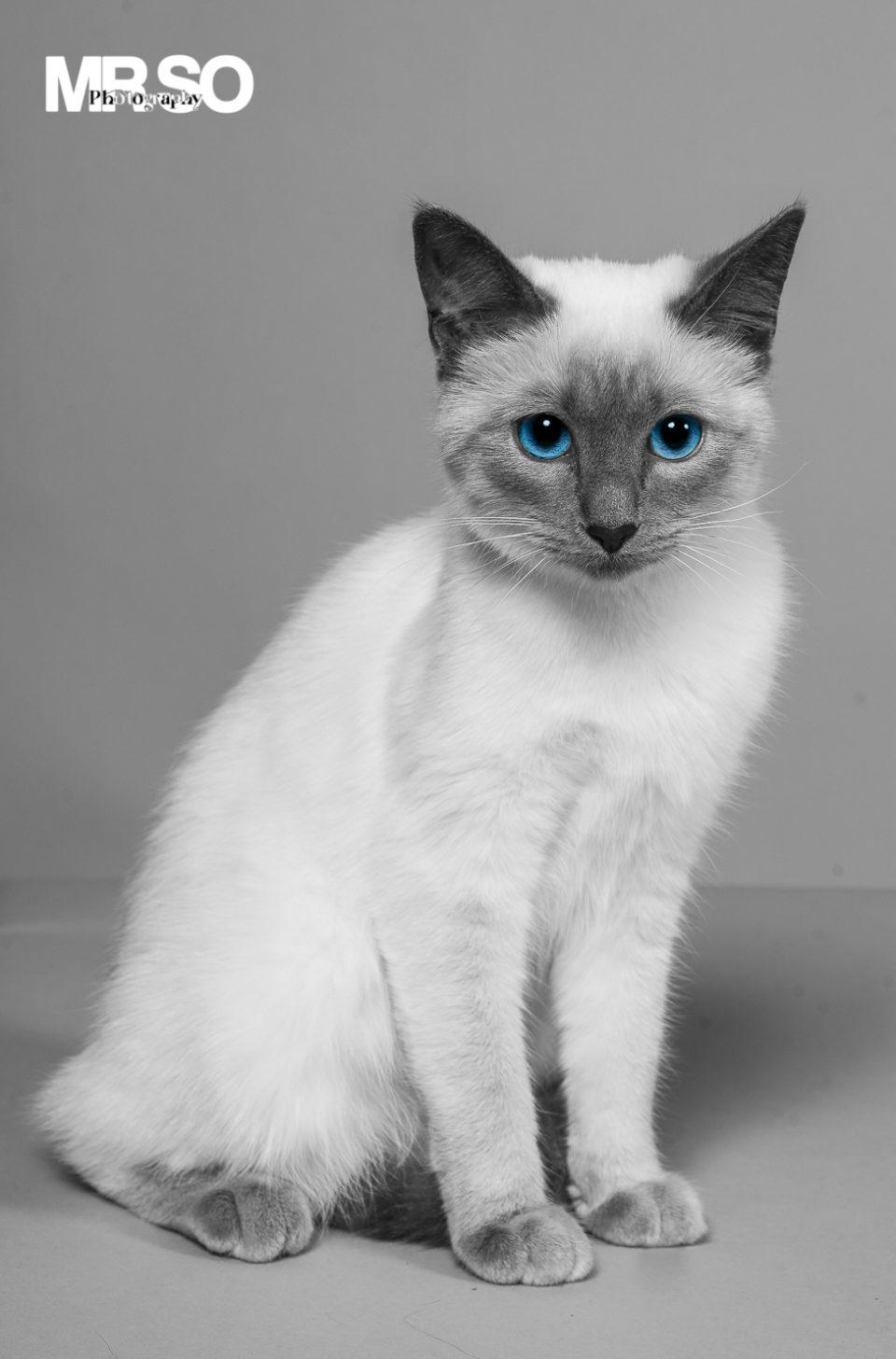 Le chat: Photographe animalier 45 Orléans Loiret et Centre Val de Loire